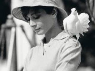 Terry O'Neill Hepburn With Dove - Ashcroft Art