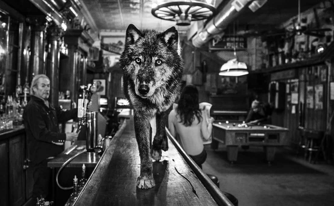 David Yarrow available with Ashcroft Art