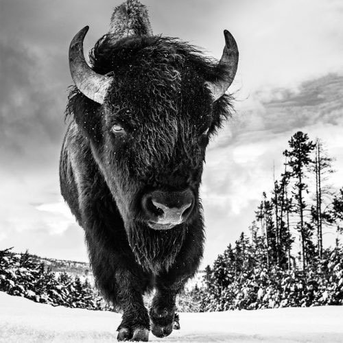 David Yarrow Photography available through Ashcroft Art