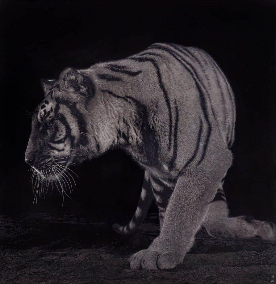 Mark Evans Tigers