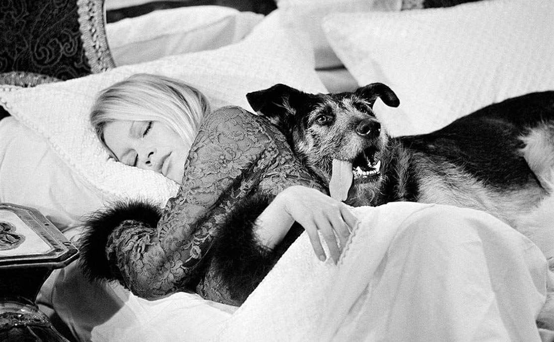Terry O'Neill - Bardot and her Dog in Bed
